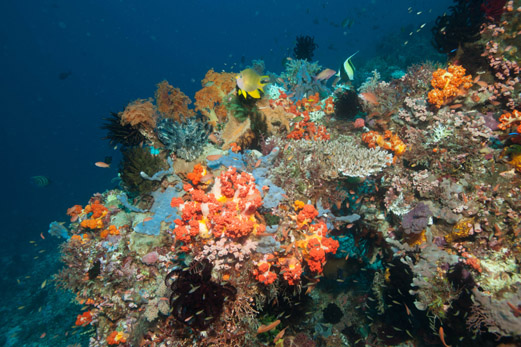Korallen in Rinca